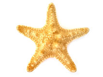 Starfish isolados no fundo branco imagem de stock royalty free