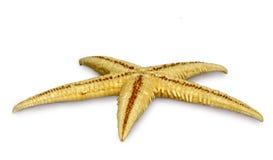 Starfish isolate Stock Photo