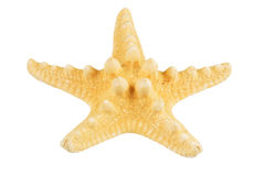Starfish isolated. Over white background Royalty Free Stock Photography