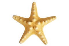 Starfish isolated. Over white background Royalty Free Stock Photos