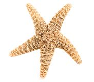 Starfish Isolated Royalty Free Stock Images