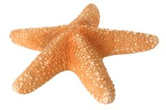 Starfish isolated Stock Photography