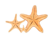Starfish. Isolated starfish on the beach in summer stock photography