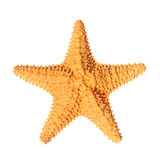 Starfish isolated Royalty Free Stock Photos