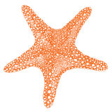 Starfish Isolated object Hand drawing style royalty free illustration