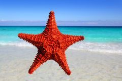 Starfish isolated in a tropical turquoise beach Stock Photography