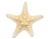 Starfish on isolated on white royalty free stock photography