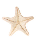 Starfish isolated. On a white Royalty Free Stock Photo