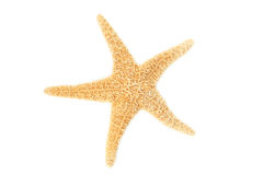 Starfish isolated on white Royalty Free Stock Photos