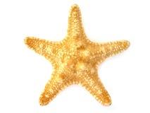 Starfish isolated on white background Royalty Free Stock Image
