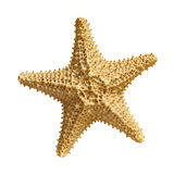 Starfish  isolated on white background Royalty Free Stock Photos