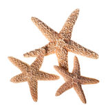 Starfish Isolated on White Background Stock Images