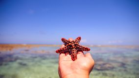 Starfish in the lagoon on the southern beach on the ocean. Marin. Starfish in the lagoon on the southern beach on the ocean Stock Photography