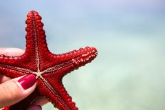 Starfish in the lagoon on the southern beach on the ocean. Marin. Starfish in the lagoon on the southern beach on the ocean Royalty Free Stock Images