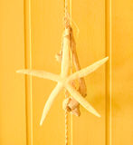 Starfish. Large starfish on yellow background Stock Photography