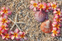 Starfish and leelawadee flower Royalty Free Stock Photos