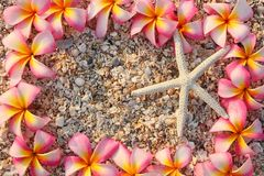 Starfish and leelawadee flower Stock Photography