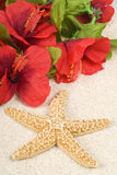 Starfish and Lei on the Beach Stock Images
