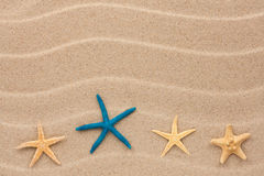 Starfish lie on the sand Stock Image