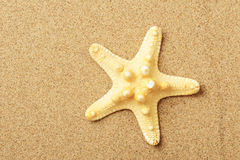 Starfish lie on seacoast royalty free stock photography