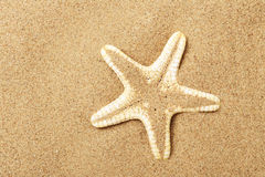 Starfish lie on seacoast Stock Images