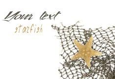 Starfish lies on a fishing net Stock Photography
