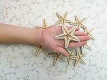 Starfish. Lies on human hand Stock Images