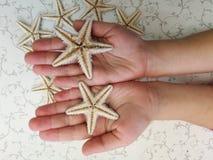 Starfish. Lies on human hands Stock Photos