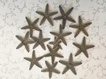 Starfish. Lies on white floor Royalty Free Stock Photo