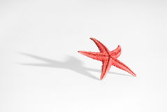 Starfish lifestyle. Starfish with large shadow and limited DOF on a white background. You can see more of the same serie in my portfolio Stock Image