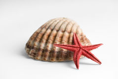 Starfish lifestyle Royalty Free Stock Image