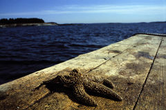 Starfish on Lobster Boat Rail Stock Images