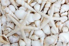 Starfish Lovers stock photo