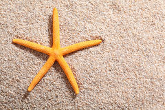 Starfish lying on golden beach sand Stock Photos