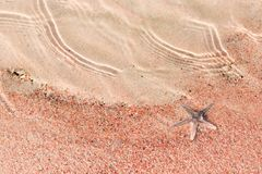 Starfish lying on the pink sand of shelly beach Stock Image