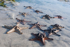 Starfish is lying on Sand with water Royalty Free Stock Photos