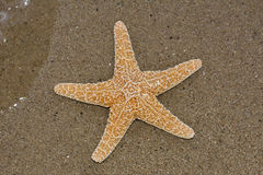 A starfish lying on a sandy beach Stock Images