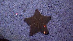 Starfish lying on the sandy bottom. Marine life close-up stock footage