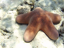 Starfish lying on sandy seabed Stock Photography