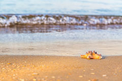 Starfish is lying on the wet sand at the beach Stock Photos