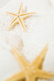Starfish Macro Behind Royalty Free Stock Photos