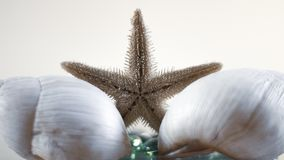 Starfish and marine oysters. Matte and warm colors. stock photo