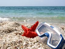 Starfish and mask Stock Image