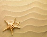 Starfish mit Sand Lizenzfreie Stockbilder