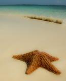 Starfish mit Welle Stockbild