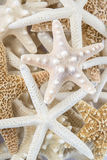 Starfish. Multiple kinds of starfish grouped together in a pile Royalty Free Stock Photo