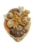 Starfish, Muscheln lokalisiert auf weißem Hintergrund Stockfotografie