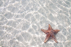 Starfish na água desobstruída imagem de stock royalty free