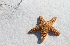 Starfish na areia foto de stock