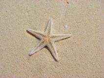 Starfish na areia imagens de stock royalty free